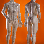 Acupuncture model two_acupuncture-guru